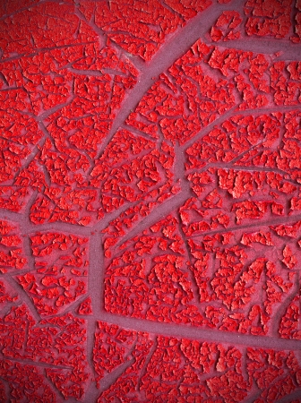 Close up red color cracked paint texture background Stock Photo - 20295786