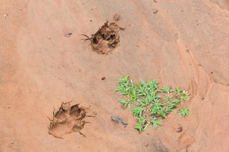 Close up the dogs tracks on wet sand after raining Stock Photo - 21047938