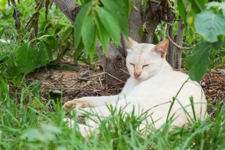 Close up Thai white cat sleeping near small tree photo