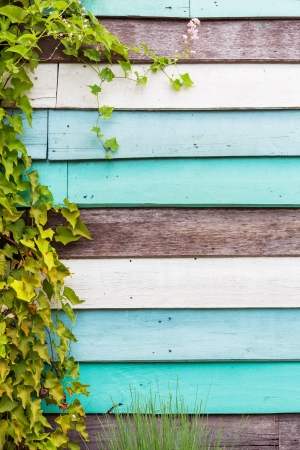 Grunge wood background with green creeper on left hand side photo
