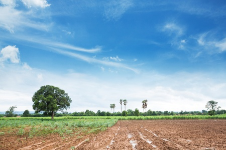 Cultivated land for planting in central Thailand photo