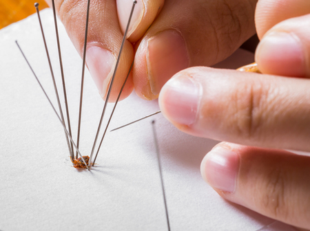 Use of insect entomology pins to set bedbug or cimex on white paper Stock Photo