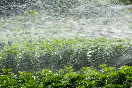 Close up watering against sunlight in farm photo