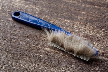 Close up fur or hair on cat comb on old wood plank Stock Photo - 23994661