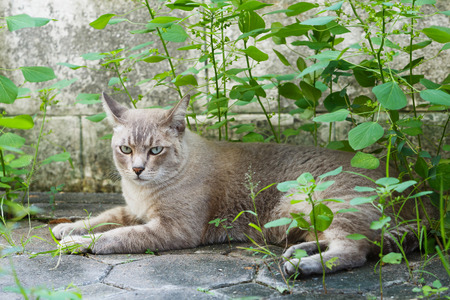 hait: Close up of cat lying on concrete floor