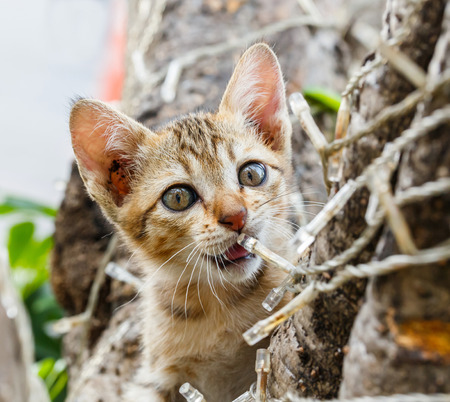 Close up Thai cute naughty cat climbing on tree photo