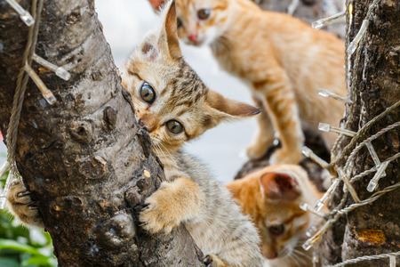 Close up Thai cute naughty cats climbing on tree photo