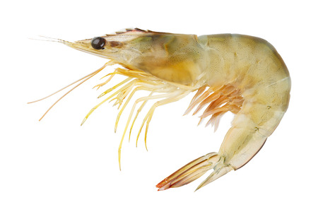 Close up banana prawn or shrimp isolated on white - with path