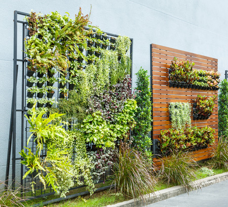 Beautiful vertical garden in city around office building Standard-Bild