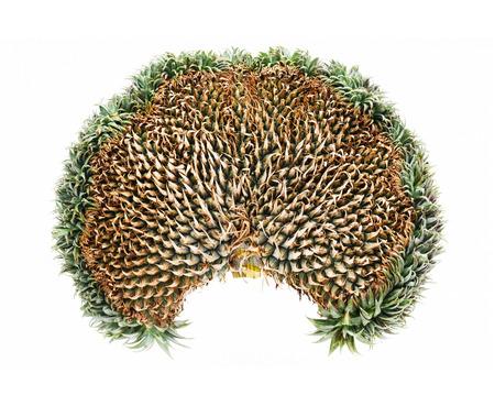 mutation: Close up exotic mutation pineapple isolated on white Stock Photo