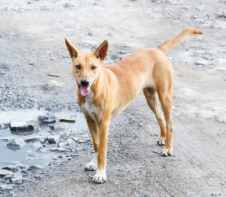 bumpy road: Close up dirty stray dog standing on bumpy road with water Stock Photo