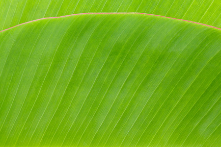 Close up green color banana leaf texture background photo