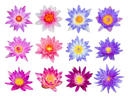 flor de loto: Lirio de agua o flor de loto set 12-1 aislados en blanco Foto de archivo