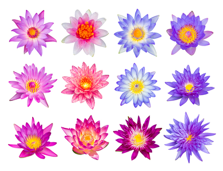 purple lotus: Water lily or lotus flower set 12-1 isolated on white