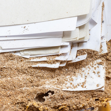 eaten: Close up damaged paper eaten by termite or white ant