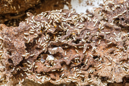 taxonomic: Close up damaged paper eaten by termite or white ant