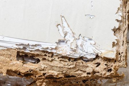 hormiga: Cierre de papel da�ado comido por las termitas o las hormigas blanco Foto de archivo