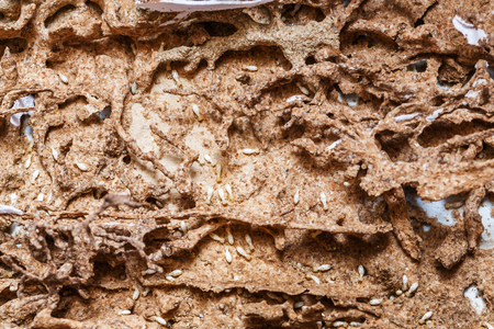 Close up damaged paper eaten by termite or white ant