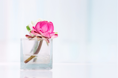 Lotus flower or water lily decoration in glass vase on table, Buddhism and zen meditation concept