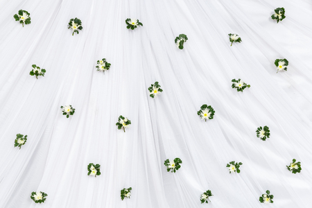 aralia: Chrysanthemum with polyscias leaf decoration on white cloth backdrop