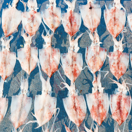 food preservation: Drying or dehydrated squid by heat from sunlight on plastic net, food preservation concept
