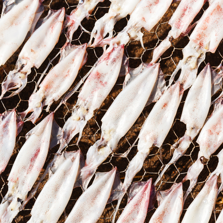 food preservation: Drying or dehydrated squid by heat from sunlight on wire mesh, food preservation concept Stock Photo
