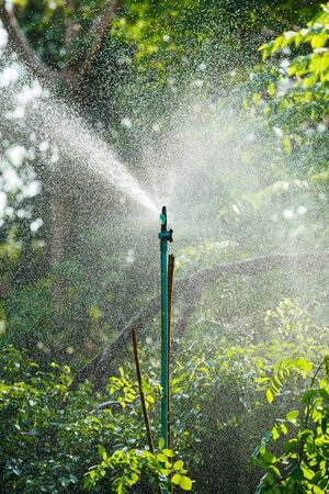 Sprinkle watering in garden or park, water saving irrigation concept