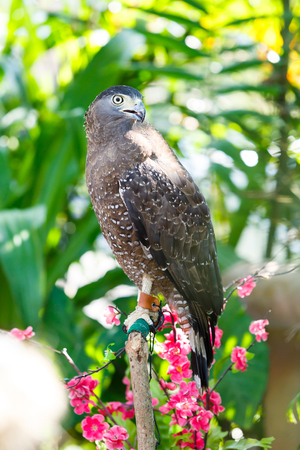 Close up hawk stand on wooden bar in garden