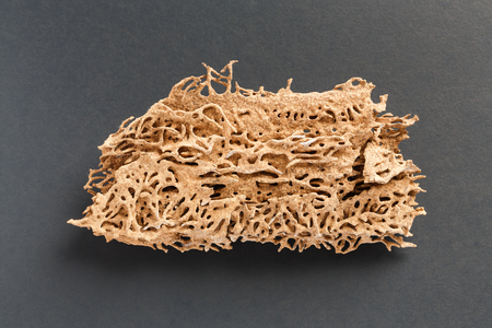 Abstract wood plank texture eaten by termite or white ant