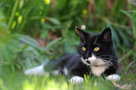 A black and white cat sheltering from the sun on some grass. photo