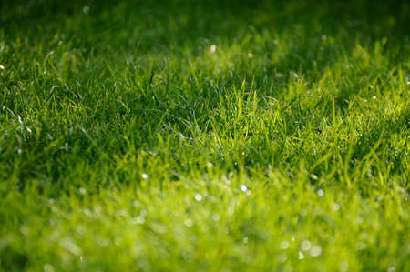 Beautiful long green grass on a summers day photo
