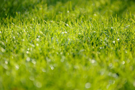 Beautiful long green grass on a summers day Stock Photo - 13743335