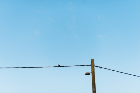 Telephone wire with a bird against a bright blue sky photo