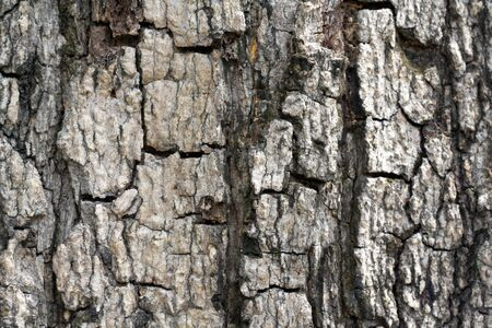 tree bark background Stock Photo - 10585069