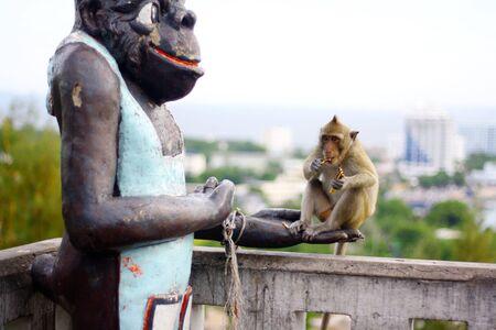 monkey eat fruit in Thai Stock Photo - 10451307