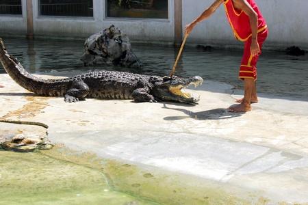 imminence: crocodile Editorial