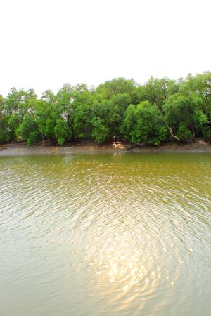 Mangrove forest Stock Photo - 13064241