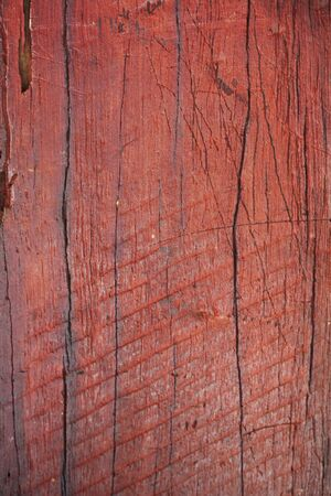 tree bark background photo