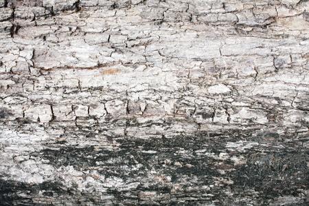tree bark background Stock Photo - 13594483