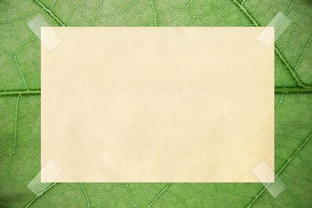 note paper taped on background Stock Photo - 14995903