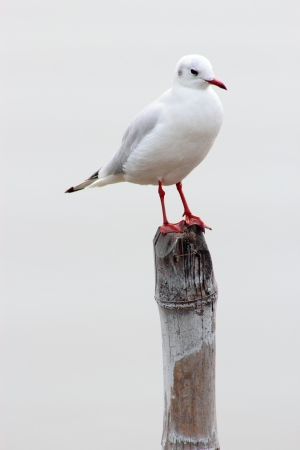 seagull perched photo