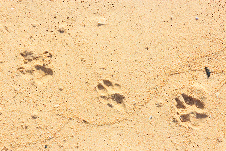 footprints sand: Footprints in the Sand of dogs