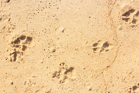 Footprints in the Sand of dogs photo