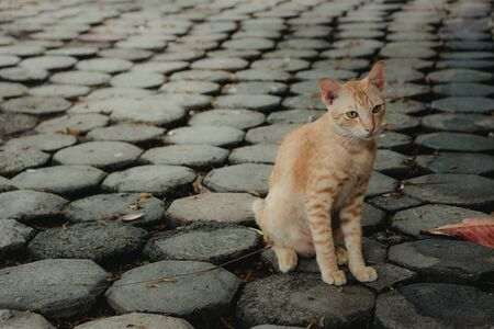 Vagrant cat. Dirty an animal in the street Stock Photo