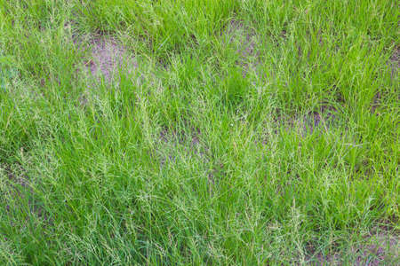 Grass texture is not perfect.
