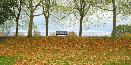 Autumn park bench scene Stock Photo - 17385468