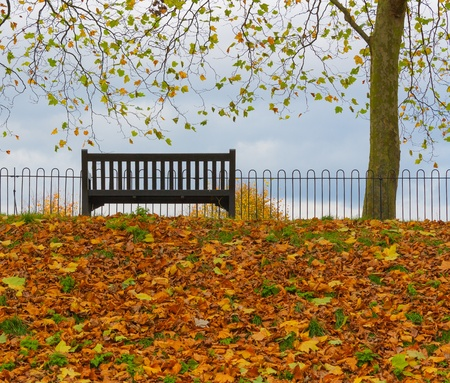 Park Bench and Tree