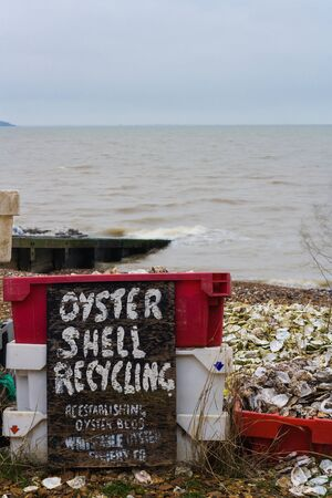 oyster shell: oyster shell recycling Stock Photo