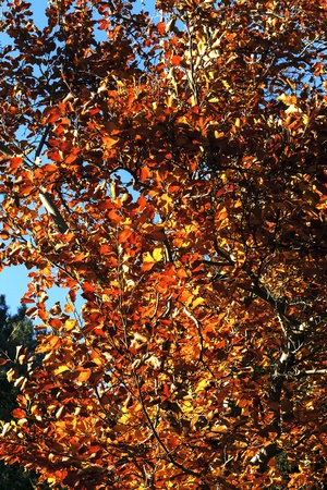 autumn rich colours