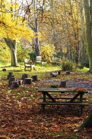 autumn picnic site